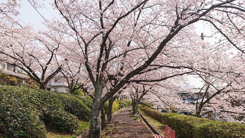 ロイヤルヒルズコート宝塚中山桜台2丁目